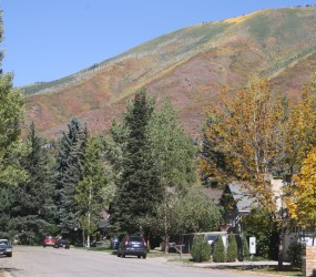 Aspen in the Fall